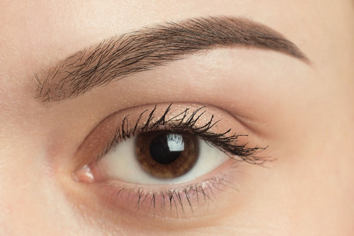 Everything You Must Know About Your Eyebrows